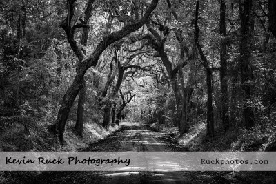 Lowcountry Roads (Edisto Island, SC)